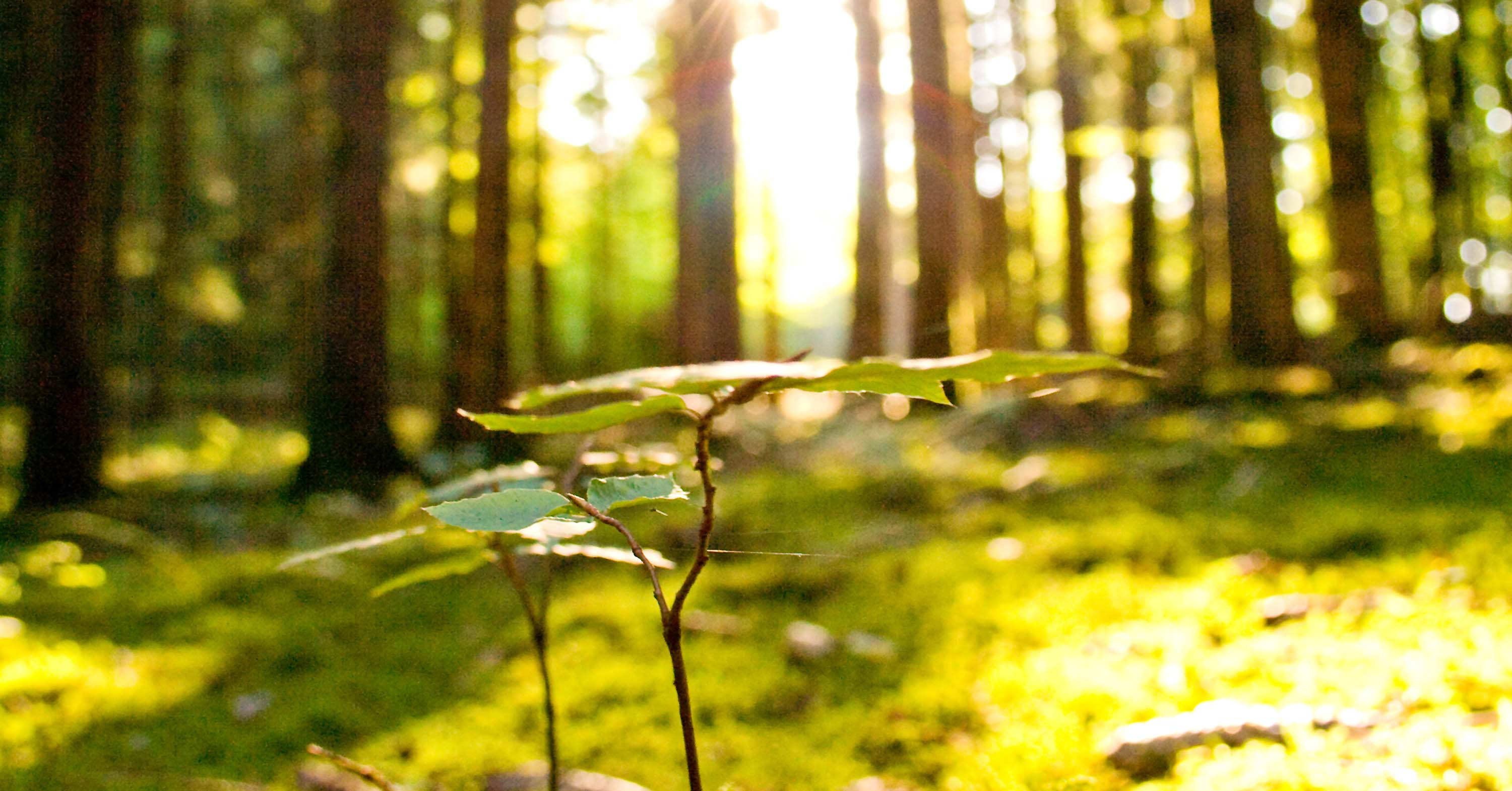 Lignoflot_Mostphotos820748-beautiful-scenery-and-sunbeams-in-the-forest.jpg